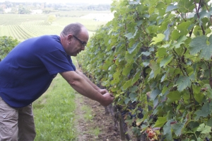 Joel im Weingarten